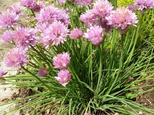 Что можно посадить в июне на огороде.