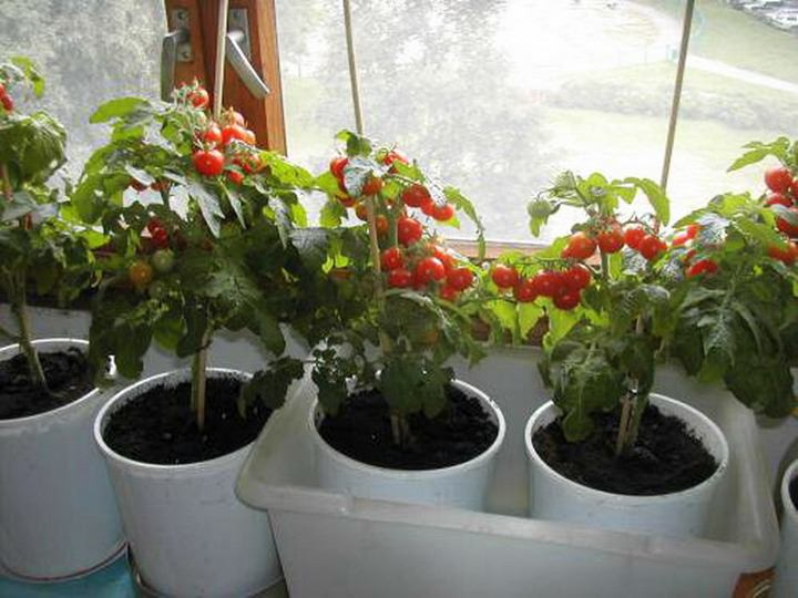 Что вырастить на балконе: интерьерно-огородный ликбез в фото