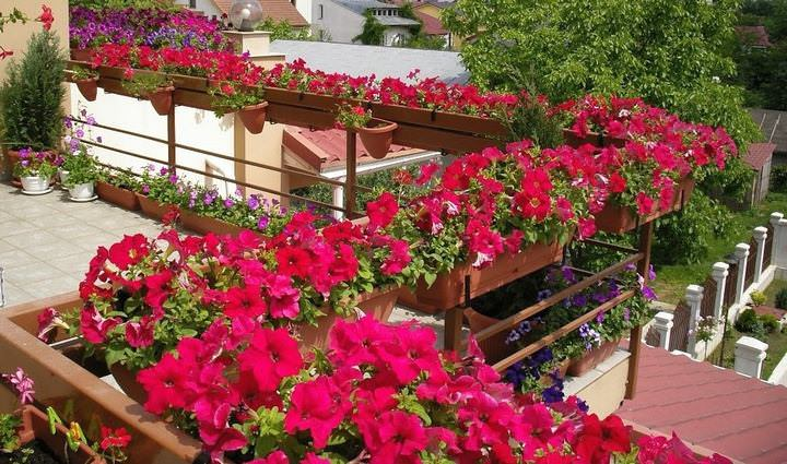 Цветы в ящиках на балконе: английский сад в родной квартире в фото