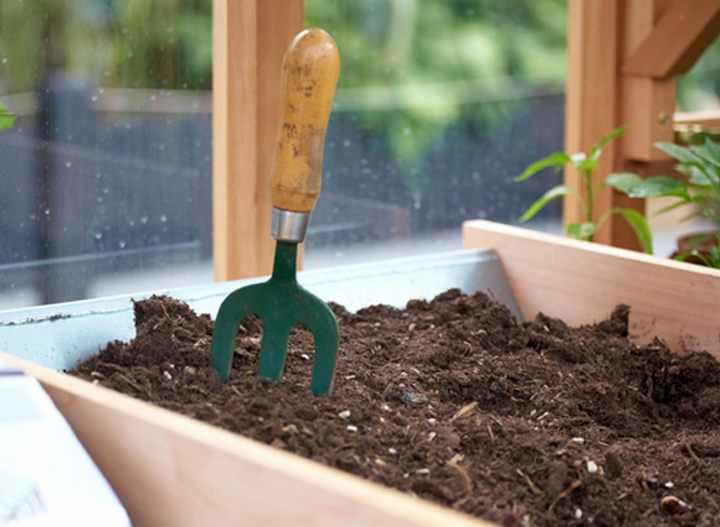 Как происходит выращивание клубники на балконе в фото