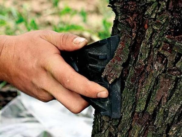 Как защитить и вылечить деревья от солнечных ожогов
