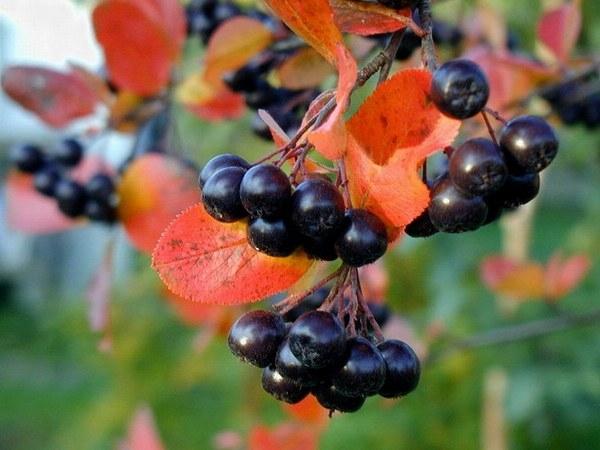 Лунный календарь садовода и огородника на ноябрь 2018 : таблица, благоприятные дни, приметы