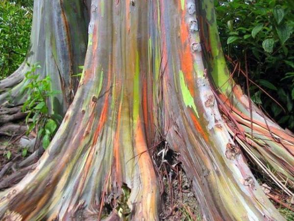 Растения с цветной корой: находка для ландшафтного дизайна
