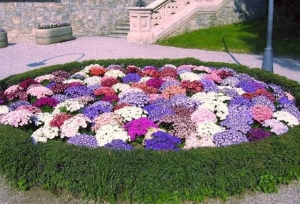 Собираюсь посадить синие цветы. Какие растения этой палитры вы мне посоветуете
